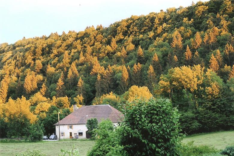 La Ferme de la Maison du Bois au cœur du Jura